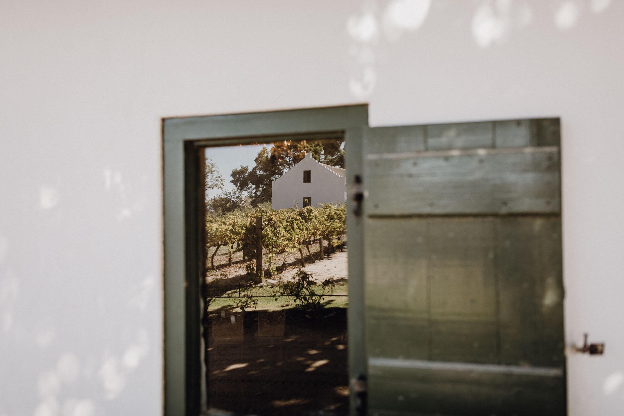 Die Reben spiegeln sich im Fenster