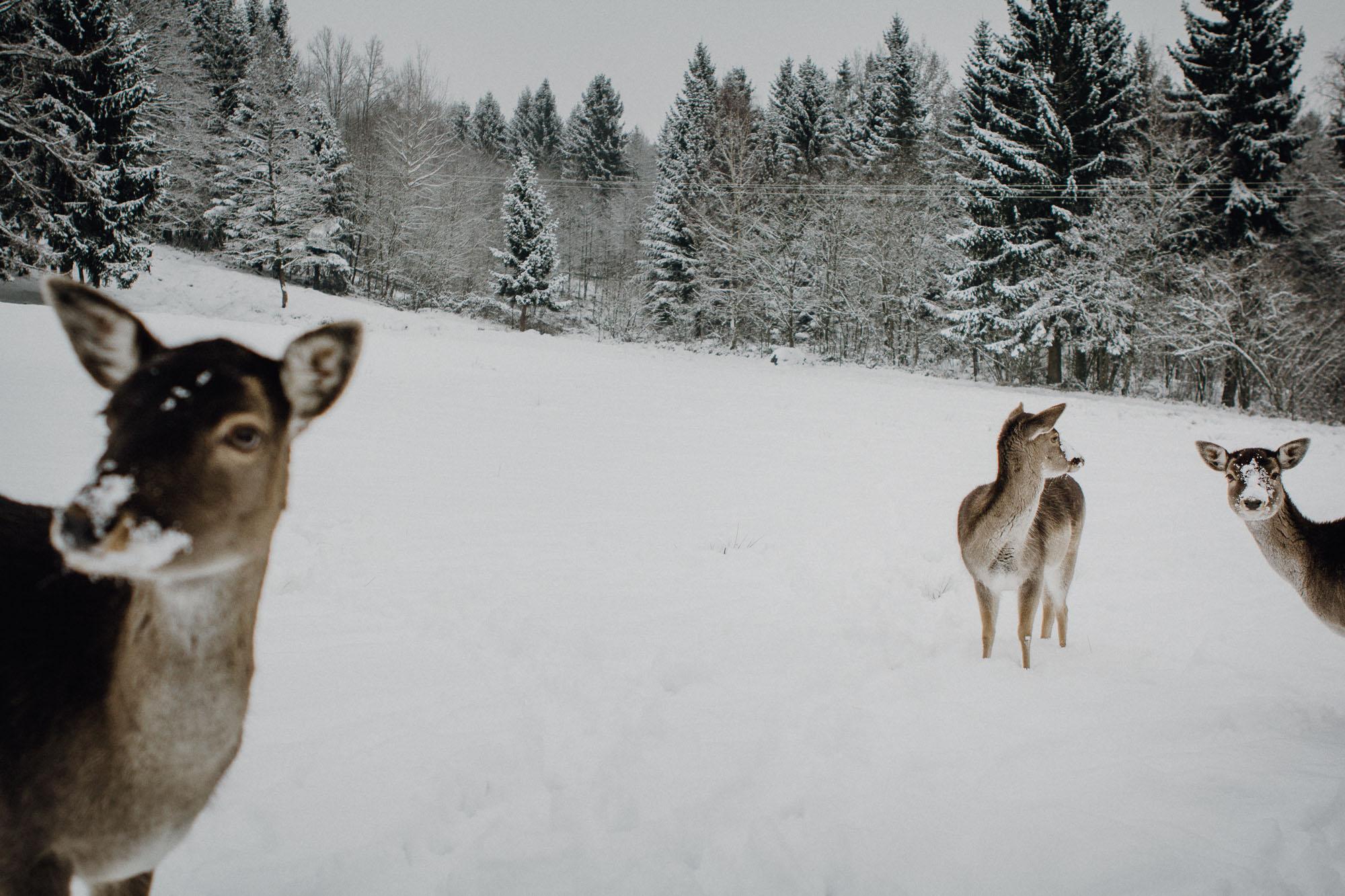 raissa simon photography destination wedding munich bayrischer wald winter snow 033 - Christine + Benjamin