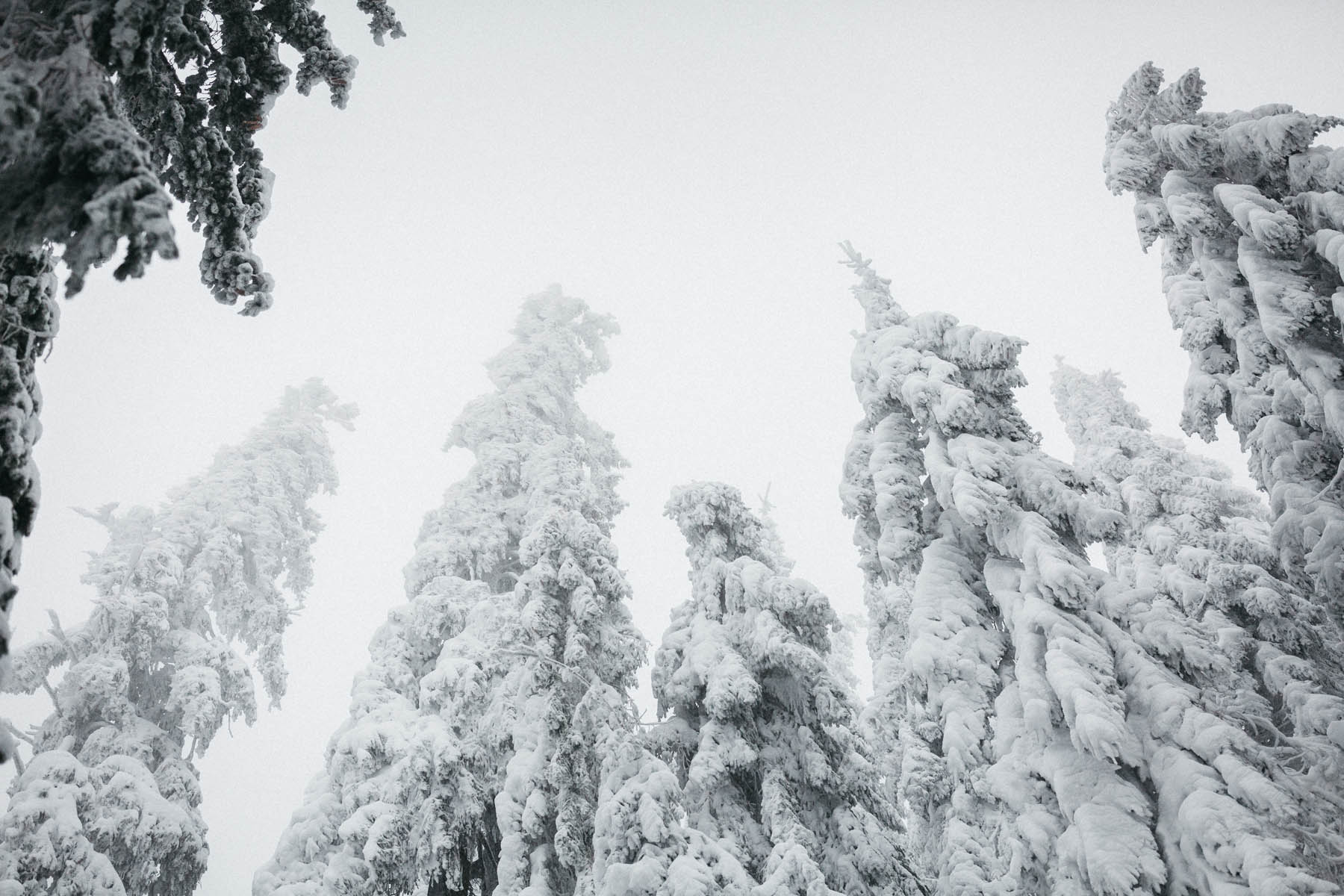 raissa simon fotografie paarshooting nais andre winter schwarzwaldhochstrasse 05 - Naïs + André