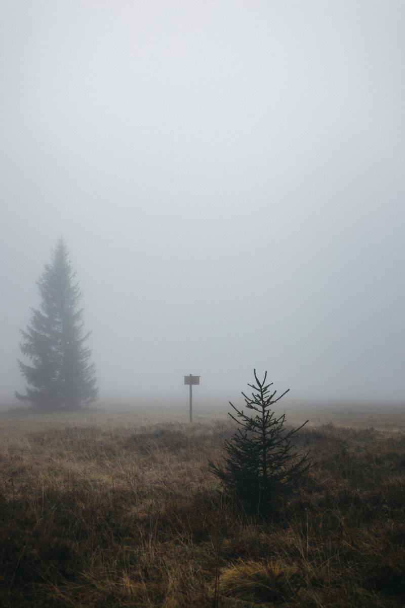 raissa simon fotografie paarshooting herbst nebel kandel schwarzwald 016 - Isabell + Jan