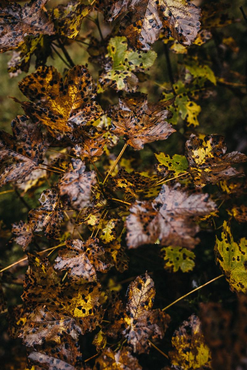 raissa simon fotografie paarshooting herbst nebel kandel schwarzwald 030 - Isabell + Jan